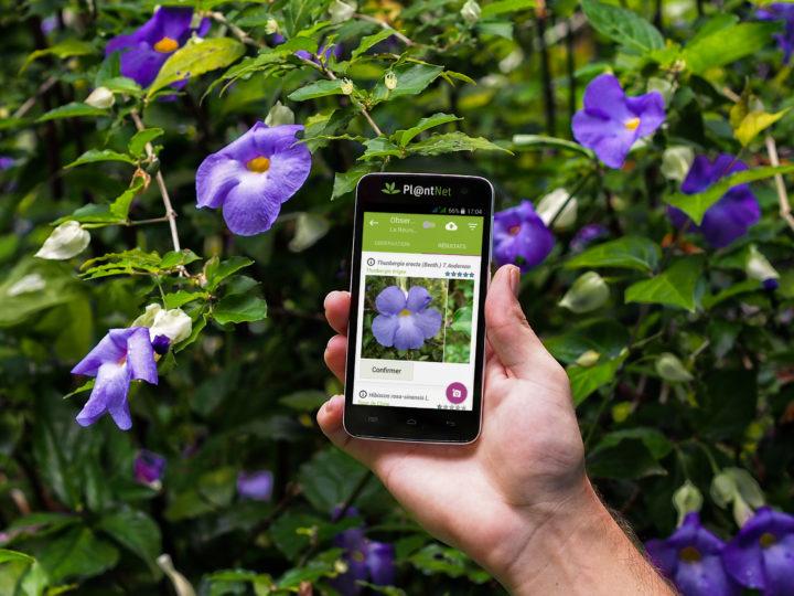 Como Descobrir O Nome Da Planta Por Foto No App